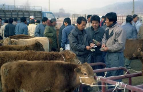 한국의 전통시장(9) 우전(牛廛), 우시장