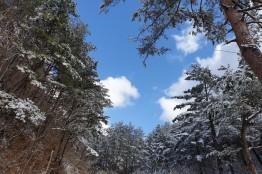 경칩도 지났으니 봄 눈이라 불러야겠다.