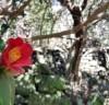 4·3사건이 뭐우까? 4월 제주에 내리는 동백꽃 피눈물