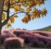 가는 가을이 아쉬워...