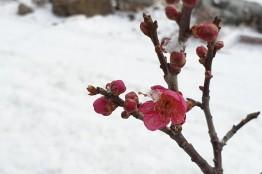 영양의 봄
